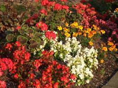 道端の花たち