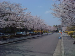 生命誌研究館の桜