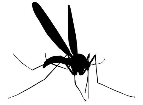 130724mosquito