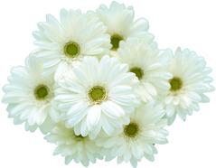 flower3912