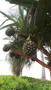 gaya_island_resort_pandan20160705_154826_