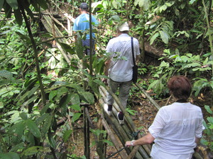 パンダウボルネオ201003 352