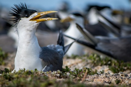 Bird Island1_1