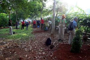 tree planting melaka