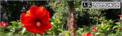 banner_hibiscus
