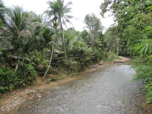 パンダウボルネオ201003 180