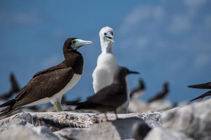 Bird Island_1