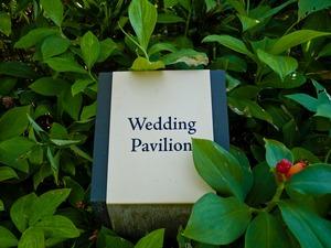 Wedding P1040654