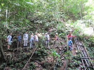 パンダウボルネオ201003 366