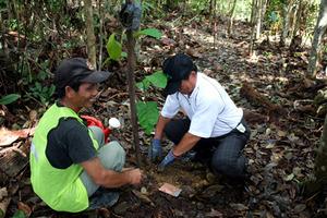 treeplanting apeng