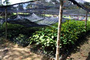 nursery apeng