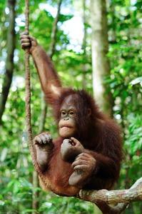 Heart2heart_SarawakForestry2