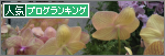 banner_orchid
