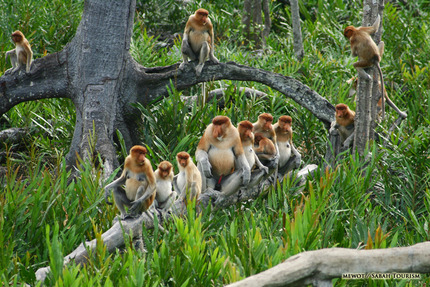 Sabah_Tourism-Mewot-PIC_144_