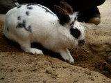 穴掘りウサギ5