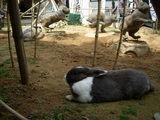 ウサギのモニュメント