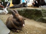 穴掘りウサギ4