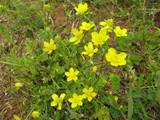 この花は何の花?