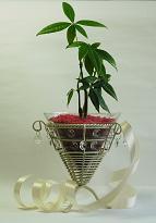 バレンタイン用レインボーサンドの鉢植