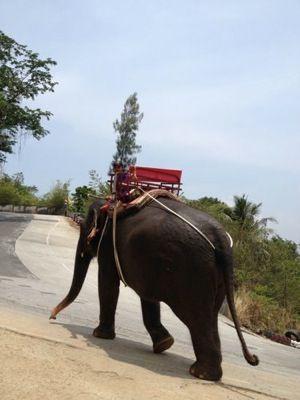 タイ ゾウ