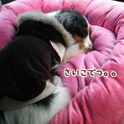 20070307_mochi3