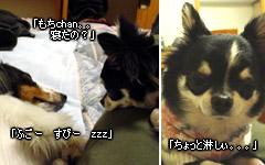 20070127_jodypuri_04