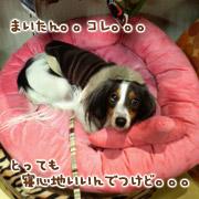 20070307_mochi2