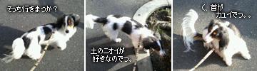 20070326_mochi