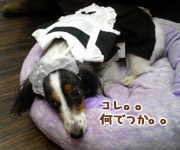 20070312_mochi