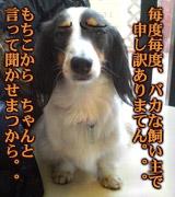 20070211_at_mikuni_5