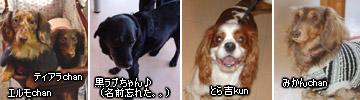 20070127_jodypuri_05