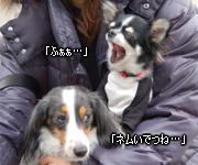 20070128_dogdept_05