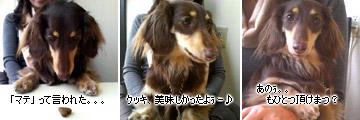 20070211_at_mikuni_3