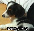 20070208_mochi4