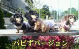20070417_petitoff4