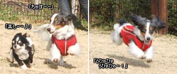 20070128_jodypuri_01