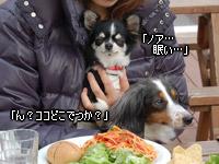 20070128_dogdept_01