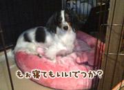 20070307_mochi4