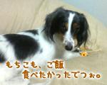 20070329_mochi
