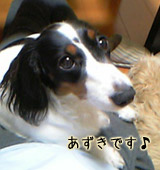 20070302_azuki
