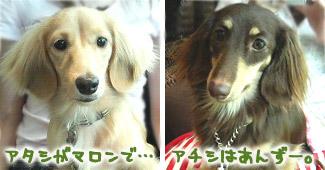 Marron & Anzu