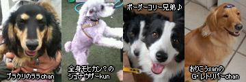20070128_dogdept_02