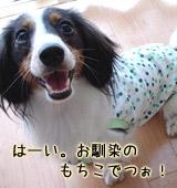 20070302_mochi