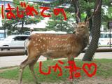 初めての鹿君