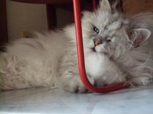 猫と一緒-20120726_02P