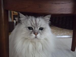 猫と一緒-20110310_02P