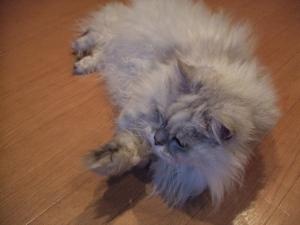 猫と一緒-20120308_06P