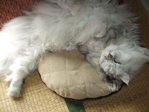 猫と一緒-20121109_09P