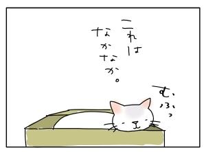 猫と一緒-20100519_10