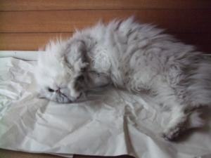 猫と一緒-20110701_01P